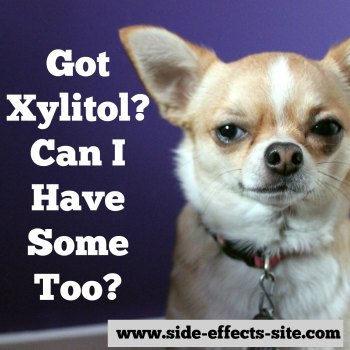 What are the xylitol risks for you, kids, and dogs?