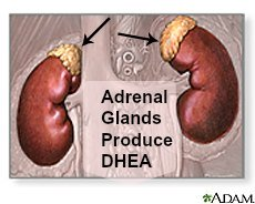 side effects of dhea produced from the adrenal glands